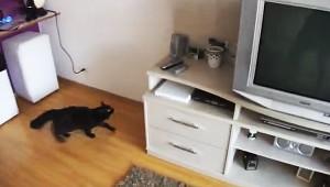 カーテンレールの上のおもちゃを取りにいく猫が機敏で凄いと話題に