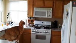 猫のジャンプ失敗動画が可愛くて面白い