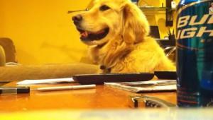 ギターの音が流れるとノリノリ!でもギターが止まると不機嫌になる犬