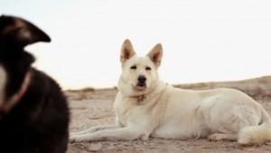 犬のための犬テレビ局DOGTVが実在する!信じられないかもしれませんが本当です