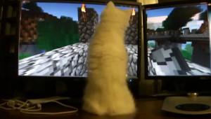 猫は外で遊ばない?ゲームの世界に惹きこまれた猫