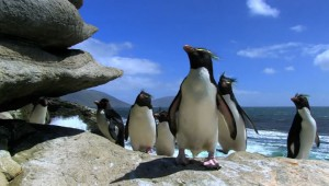 ペンギンの可愛さは最強! 観てると癒やされるペンギン動画が萌え萌えすぎる件