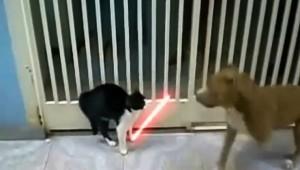 ジェダイのライトセーバーをマスターした猫