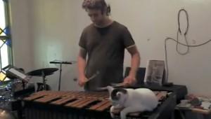 楽器の練習を邪魔する飼い猫の動画が可愛い