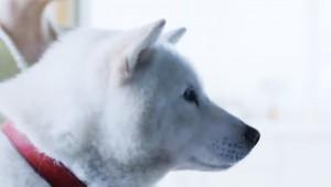 【人気テレビCM観察】ソフトバンクの犬のお父さんのCMの謎に迫る