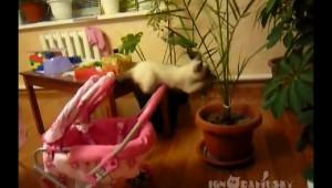 観葉植物に夢中な猫を襲った悲劇