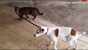 猫が犬を散歩させている動画が大人気! こんなのありえるんだ(笑)
