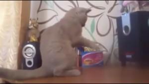 スピーカーの前で見えない何かと戦う猫が謎で可愛い