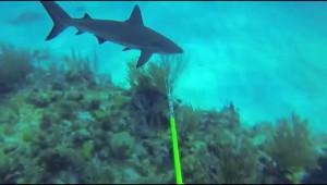 ダイバーがサメに襲われる動画が恐ろしすぎる