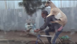 一体なぜ? ヤギと自転車二人乗りしている男性が話題に