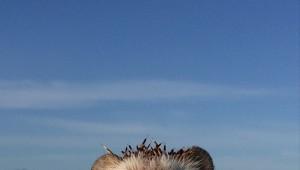 まるで役者の表情! 旅するハリネズミ「ビディ」が可愛すぎて45万フォロワーを超える人気!