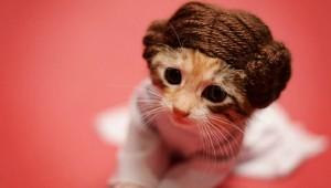 究極に可愛い!! 猫のコスプレ画像5選
