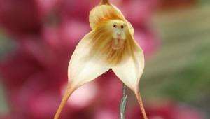 何か別のものに見えてしまう花の画像6選