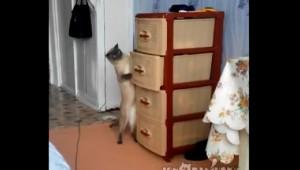 猫が暴走したら悲惨な事故に!