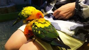 最高に癒やされる! 鳥と一緒にお茶できる「鳥のいるカフェ」に行ってみた