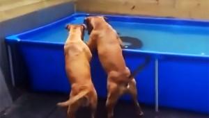 【衝撃動画】仲良しワンコ2匹が協力して水に沈むタイヤをゲット!
