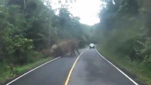 【衝撃動画】バイクを走らせる → 象が襲ってきた → バイクで逃げる
