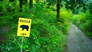 日本各地で出没中! 山で熊と遭遇しないための7つのルール