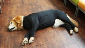 犬だって疲れるんだぞ! 犬用の休養時専用リカバリーウェアが発売中だぞ(笑)