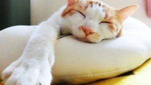 【簡単すぎる】寝てる間に英単語を覚えるための3つのコツ