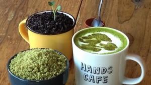盆栽と触れ合える! 渋谷東急ハンズに『BONSAI CAFE』(盆栽カフェ)が期間限定オープン