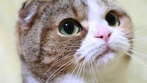 研究者「子猫や子犬の画像を見るだけで人間の集中力はアップする!」