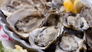 【激ウマ】牡蠣の食べ放題やるぞおおおお! NYから上陸した100年の歴史ある『グランドセントラルオイスターバー』