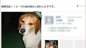 保健所で殺処分される犬がネットで最後の助け / なかには「新しい犬を飼うから古い犬を処分したい」という人も