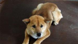 保健所で殺処分を待つ犬の情報を見られるサイト / 引き取り人が現れると助かる