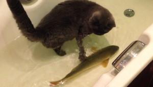 【衝撃動物】猫とコイが仲良くしている動画がスゴイ! 一緒に遊んでジャレてる(笑)