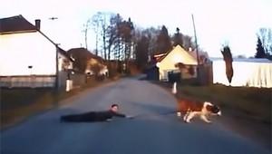【衝撃動物】犬に散歩させられている少年の動画がヤバイ(笑)!