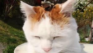 【衝撃動画】カエルと猫が仲良しすぎて凄い! 頭にカエルをのせて昼寝するニャンコ(笑)