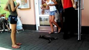 【衝撃猫】絶対にマクドナルドから離れない熟睡ニャンコが世界中で大人気!