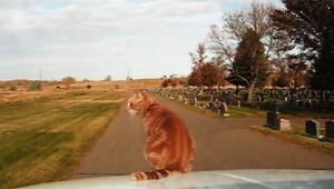 【衝撃】走るクルマの中や外を自由に移動する猫がヤバイ!