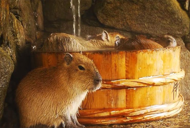 capybara-ofuro0