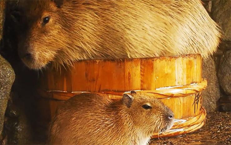 capybara-ofuro1