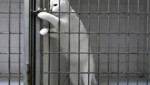 【衝撃】扉の鍵を開けて外に出るネコが凄い! まるで人間のようだ
