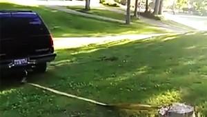 【悲劇】これはひどい(笑)! 木を車で引っこ抜こうとしたら惨事に