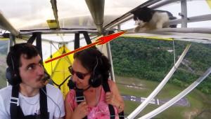 【危険】飛行機の翼にネコがいた! 大空に飛んでから気がつく