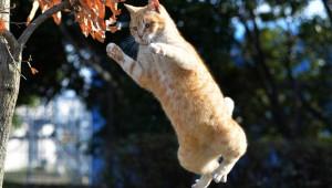 【危険動物】猫VSヘリコプターの戦い! 最後に勝ったのはどっちだ!?