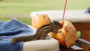 ココナッツオイルの料理以外の意外な使いかた20選