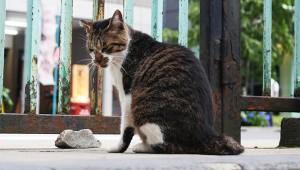 【秘密】秋葉原の「隠れ癒やしスポット」がマジで癒やされる件 / 猫の楽園『柳森神社』