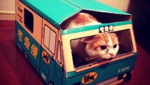 【衝撃事実】猫は人間の気持ちを理解してる事が判明 / 猫を科学的に実験して判明した事7つ