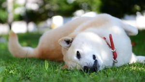 【衝撃】犬の死亡原因ランキングトップ10発表 / 悲しい現実が判明