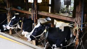 【衝撃】東京都心部に牧場があった! 牧場も牛も見学可能! 限定アイスも食べられるぞ(笑)
