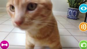【衝撃】外出先からペットの犬猫に声をかけられるぞ! エサもやれて写真も撮れるぞ!