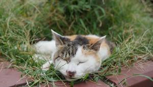 【8K動画】猫の街「谷中銀座」の猫と猫と猫たちの猫動画