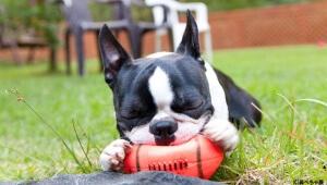 【愛犬】可愛すぎて悶絶しながら手が震えて足をガクガクさせそうな『鼻ぺちゃ展』開催中決定ィィィ!