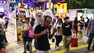 路上ライブやってるけど人が集まらないから犬を乗せてみた → 大盛況