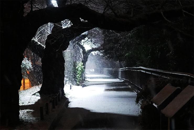 tokyo-yuki-2016-5